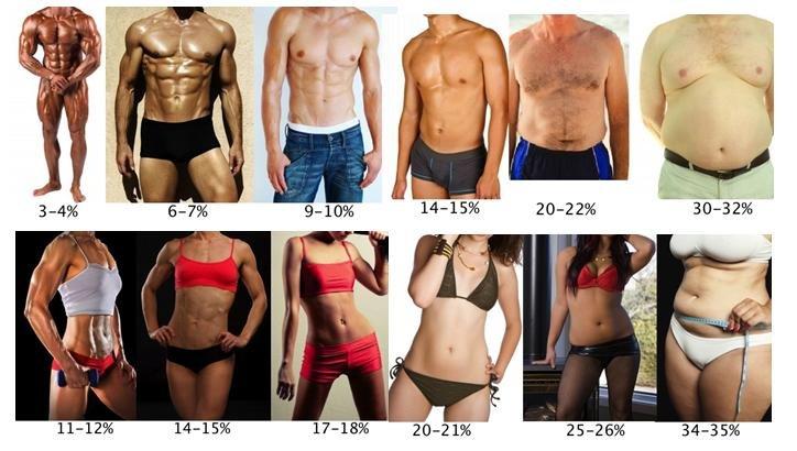 fogyás testzsír százalék